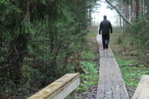 Der Waldweg Ojaäärse