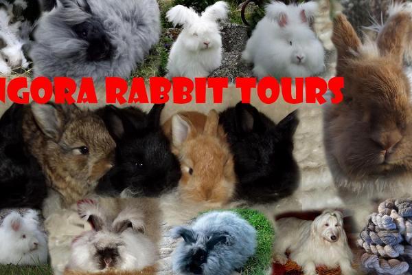 """Besök till kaningården """"Angorarabbitstours"""""""