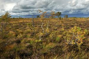 """Viruna talu kanuu- ja rabamatk """"Puhastusreis Naistepuumetsa randa"""""""