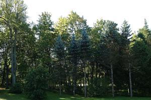 Vana-Kūstes parks