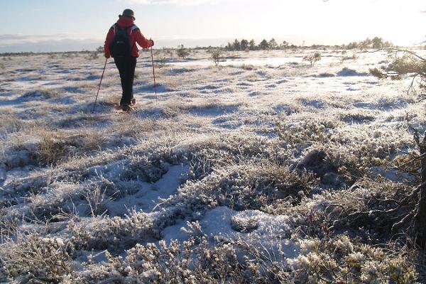 Snowshoe hike in Sirtsi bog