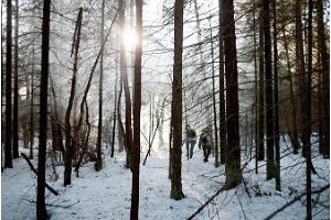 Pārgājiens ar sniega kurpēm Marimetsas purvā