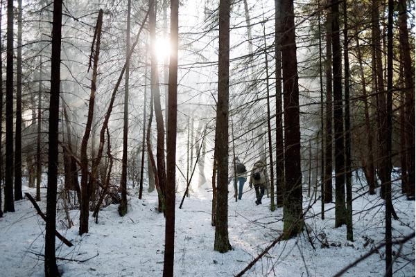 Snöskovandring i Marimetsa högmosse