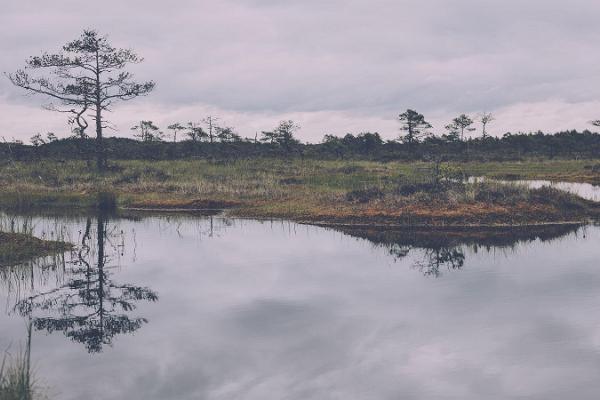 Räätsamatk ja rabalaugastes ujumine Kõrvemaal