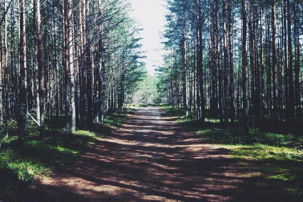 Wanderweg Oandu-Ikla