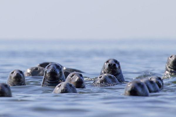 Regular seal-watching trips to islands in Kolga Bay in the summer of 2019!