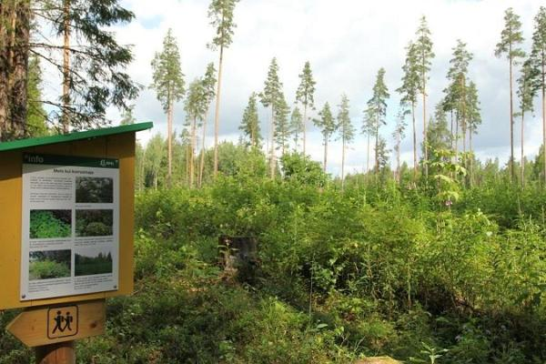 Laari forest study trail