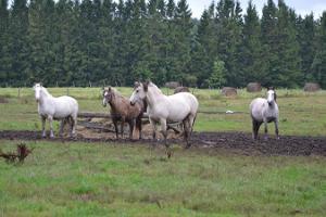 Horse-riding at Tika Farm