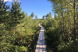 Поход по болоту Пяэскюла