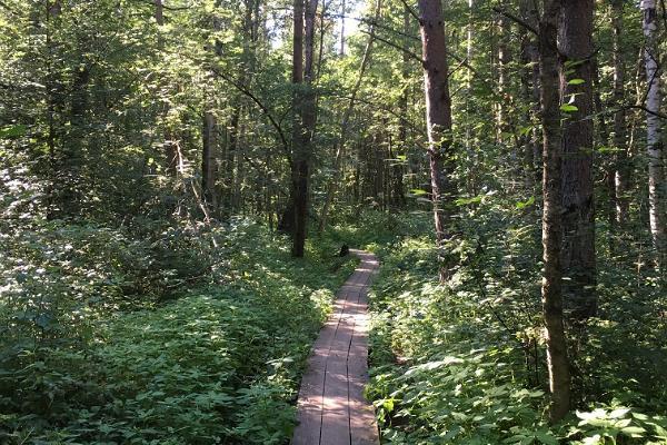 Kurzer Kurs zum Zurechtkommen in der Natur im Hochmoor Pääsküla