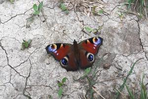 Vienas dienas ekskursija Tabasalu dabas parkā