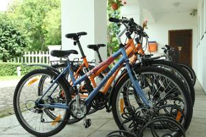 Прокат велосипедов на мызе Сагади