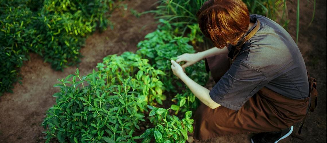 В садах, лесах и на фермах можно найти множество полезных и вкусных продуктов