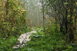 Туристические тропы Пенийыэ