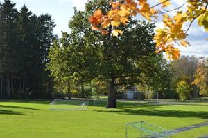 Orissaaren stadionin tammi - Euroopan vuoden puu 2015