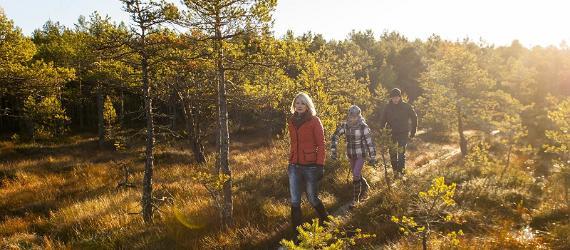 Осень в Эстонии - лучшее время для прогулок по туристическим тропам