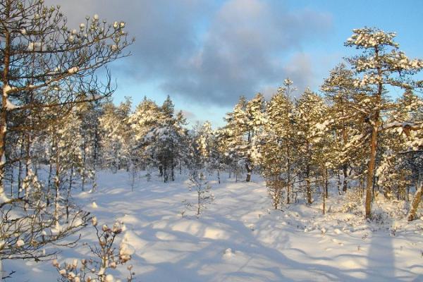 Julen och vintern i Lahemaa