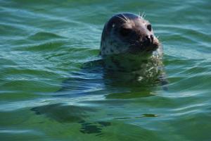 Robben-Beobachtungsreise auf der Insel Hiiumaa