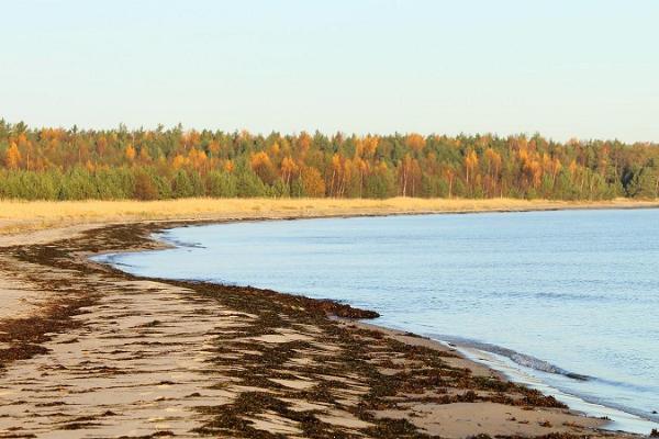 Tõrvanina rand ja telkimisala