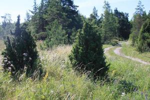 Cykeltur på egen hand på Ormsö
