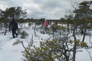 Snöskovandring i Linnuraba
