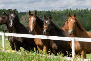 Nuiamäe riding stables