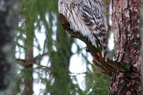 """8-Day Birdwatching Tour """"Estonia in Spring"""""""