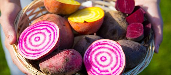 beetroot, visit estonia, superfood