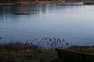 Porkuni järve linnud