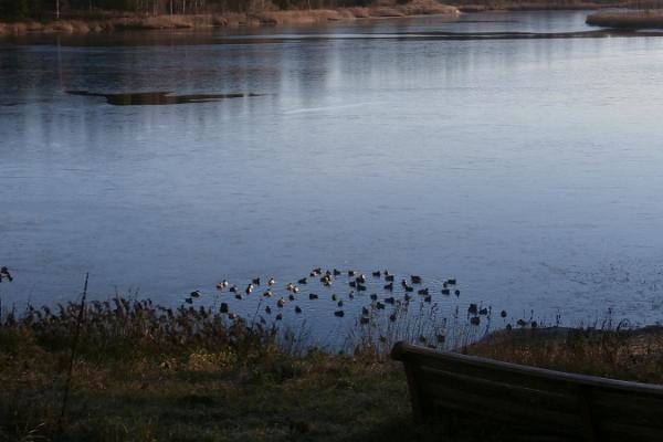 Lake Porkuni