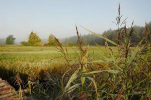 Mulgi pļava