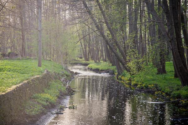 Kärdla City Park