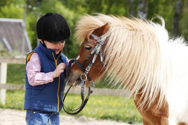 Верховые прогулки и лагеря, верховая езда для всех желающих любого уровня подготовки на конюшне Juurimaa Tall