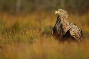 Наблюдение за птицами с Estonian Nature Tours