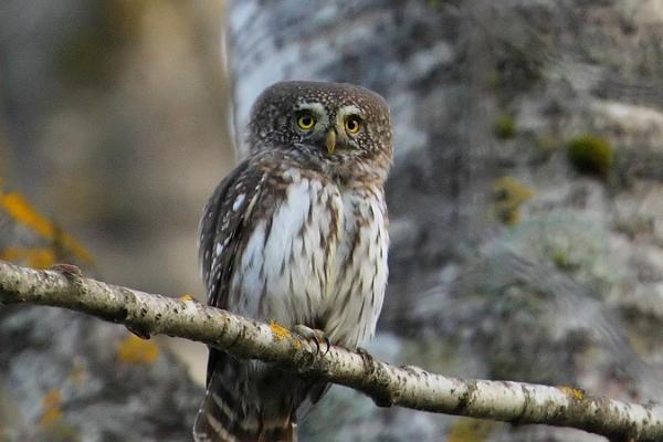 Linnuvaatlus koos Estonian Nature Tours' ga