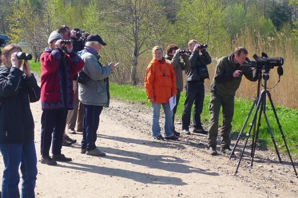 Seikle Vabaks birdwatching on the north coast of Pärnu Bay