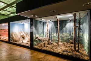 Tartu Universitātes dabas muzejs