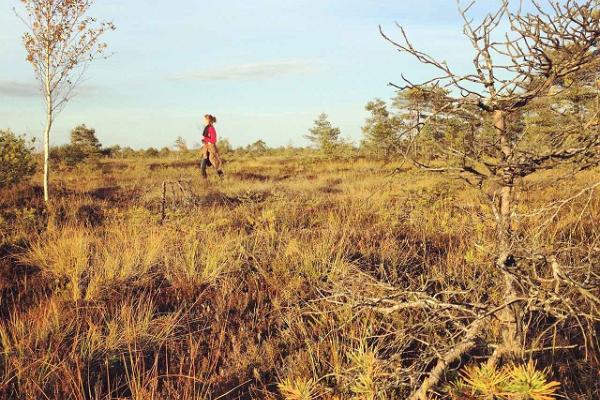 Rundtur av Kanuu.ee i Kõrvemaa med safaribil och fotvandring
