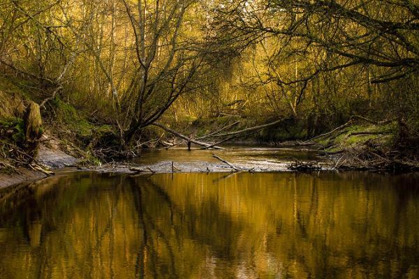 Daytour to Nature around Tallinn