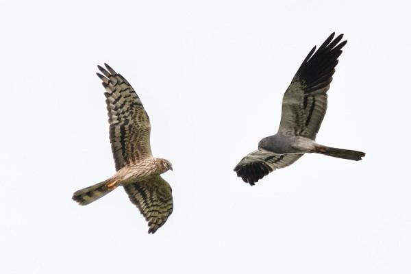 Vienas dienas putnu vērošanas ekskursija Rietumigaunijā