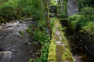 Der Wanderweg von Võsu-Nõmmeveski