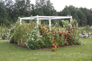 Rose garden at Roosoja Farm