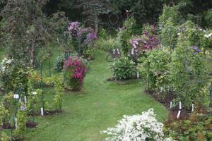 Показательный сад хутора Роогоя