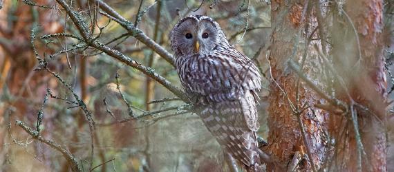Diverse species of birds can be found in Estonia.