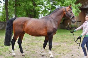 Laane Staļļi - zirgu izjādes