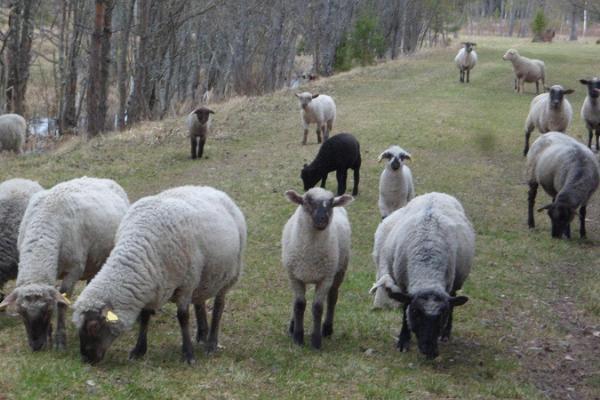 Viruna Farm