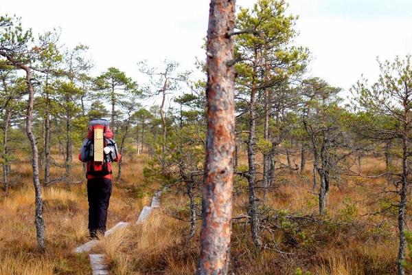 Wanderweg Peraküla-Aegviidu-Ähijärve