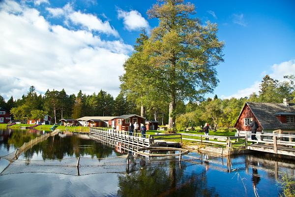 Pidula Forell Holiday Village