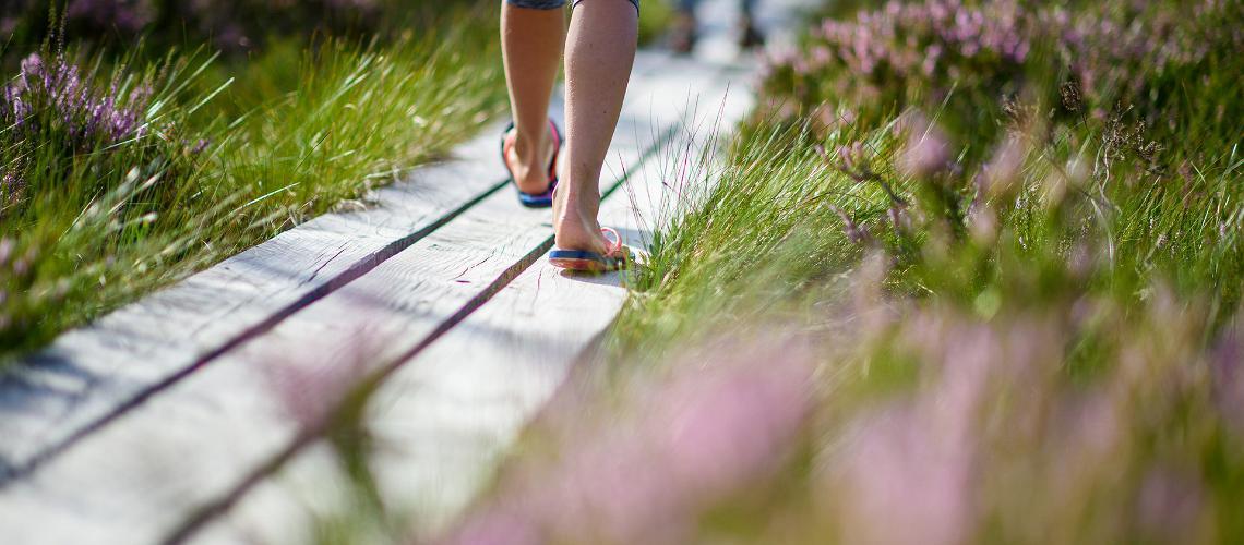 Hiking trails, visit Estonia