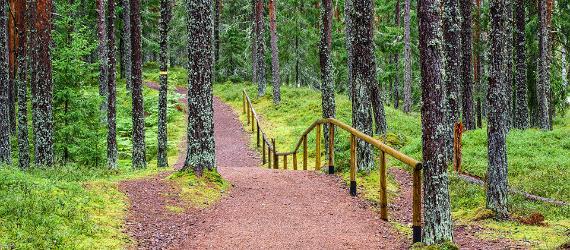 estonia-hiking-trails-oandu-nature